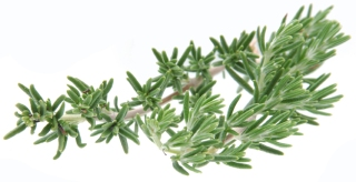 huile-essentielle-romarin-bio-02
